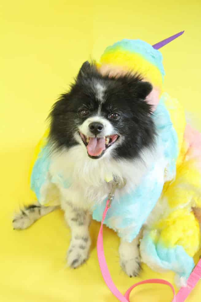 Cotton Candy dog costume