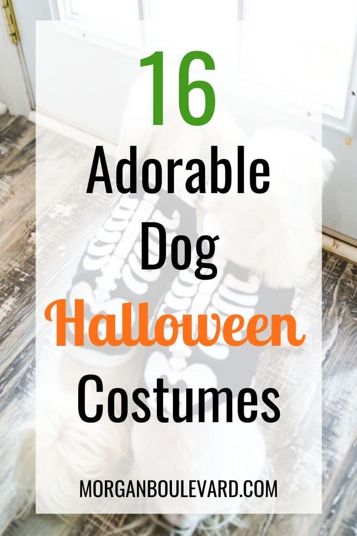 16 Dog Halloween Costumes  Perfect For Your Furry Friend