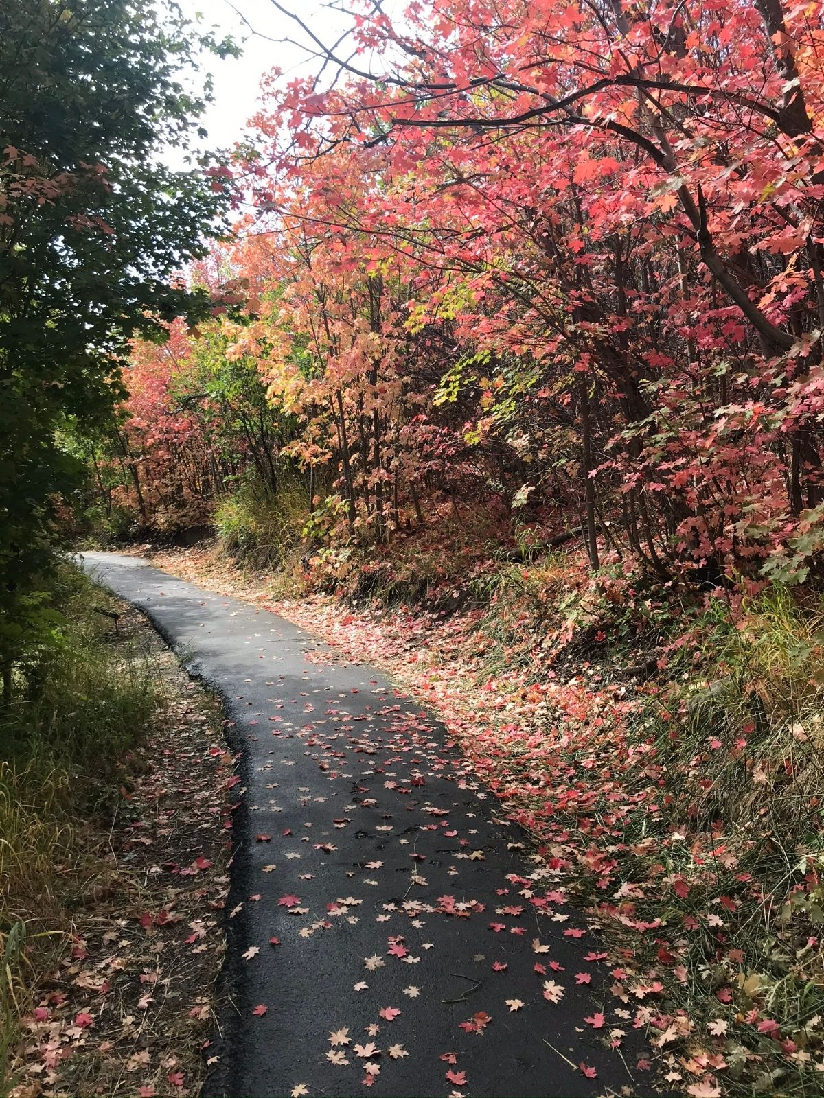 path at cascade springs with pretty fall colored leaves